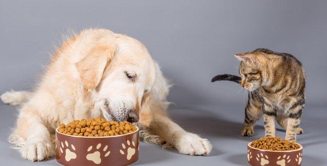 猫が餌を食べている時チラ見してくる3つの気持ち