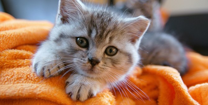 猫が『ヒゲを下げている』ときの気持ち4つ