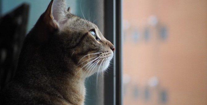 窓の外を見ている猫は外に出たいと思ってるの?