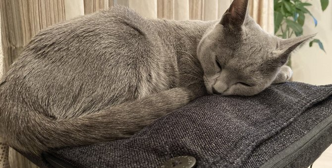 猫にマッサージは必要?そのメリットとタイミング