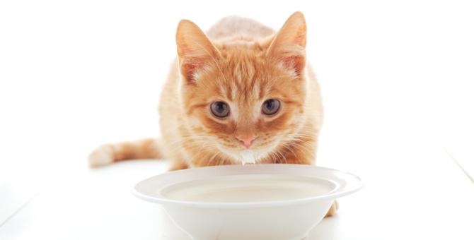 猫用ミルクの選び方と正しい飲ませ方