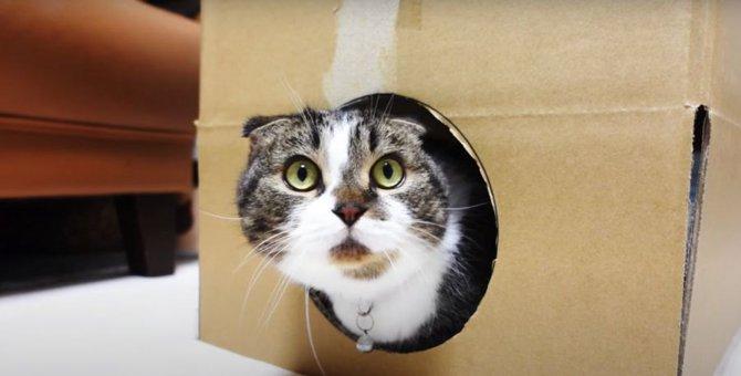 ネットで話題の猫を無限に生成する永久機関に挑戦した猫さんたち!