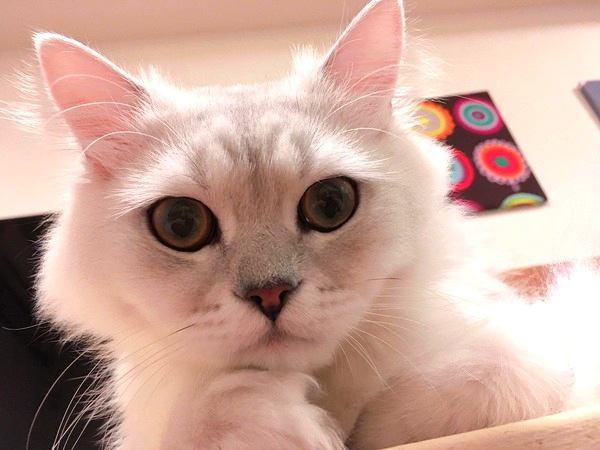 猫は飼い主のことをこう思ってる!性格別5パターン