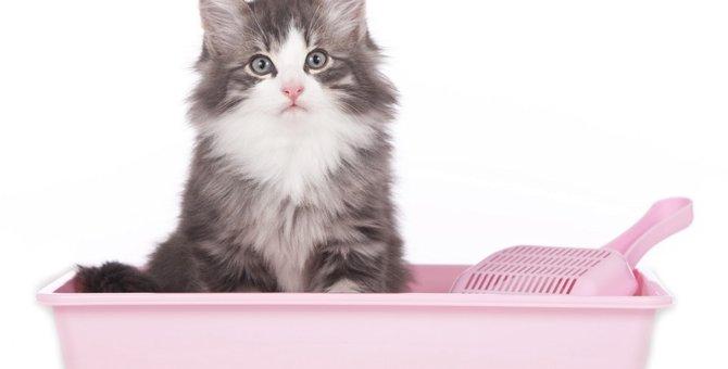 猫がトイレで排泄しない4つの原因とその対策