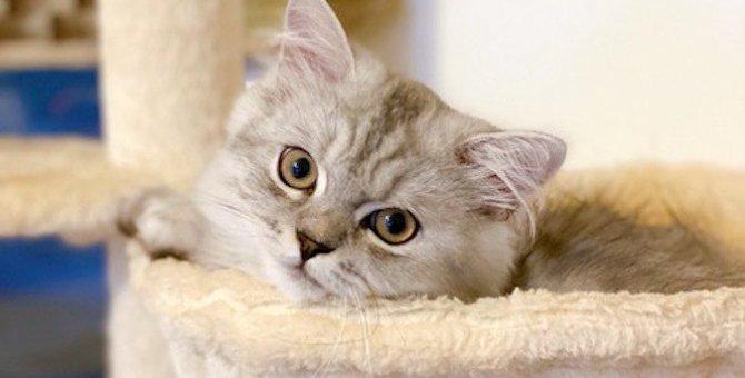 猫の『仕草』や『鳴き声』でわかる心理5選!あなたは猫の本当の気持ちに気付いてますか?