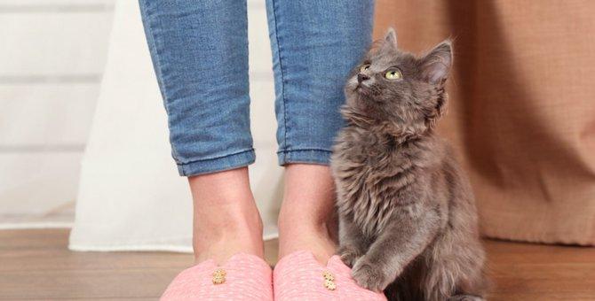 子猫が飼い主によじ登るのはなぜ?6つの気持ち