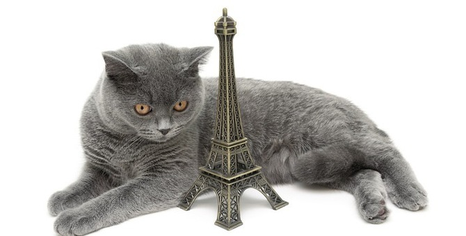 【性格?病気?】猫が高い所に登らない!考えられる理由とは