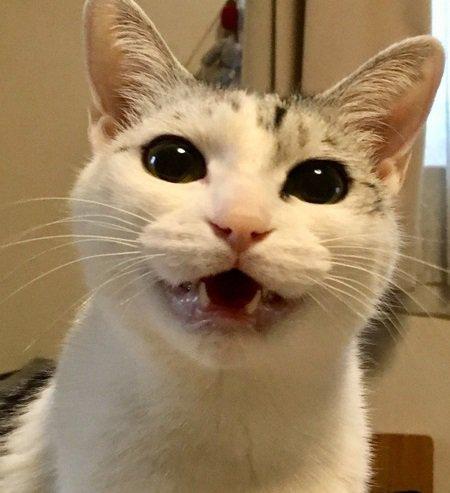 難解な猫語をマスターしよう!9つの鳴き方と意味