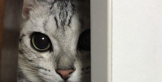 猫が飼い主を『待ち伏せするとき』の気持ち5つ
