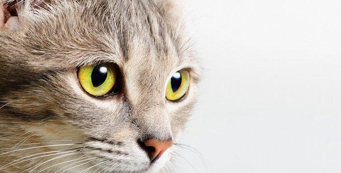猫の目が開かない…考えられる主な病気と症状。子猫の場合も