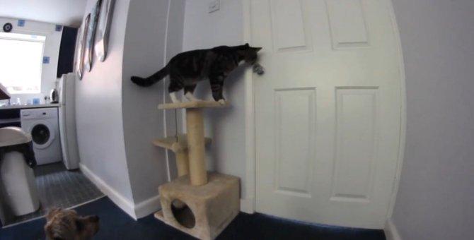 「さぁ、お行き!」ワンちゃんの為に脱走のお手伝いをする猫ちゃん