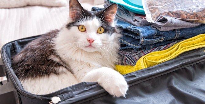 旅行中は猫をどうする?留守番させるときの方法と一緒に行く場合の注意点