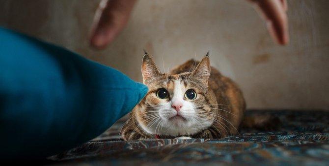 猫からの信頼が丸つぶれになる『飼い主の嫌われ行動』5選