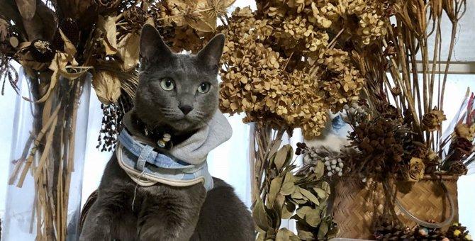 猫にぴったりの『名前』を付ける方法5つ!名付けで注意すべきポイントとは?