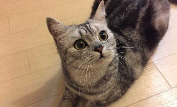 猫の『鼻』から読み取れる心理5選