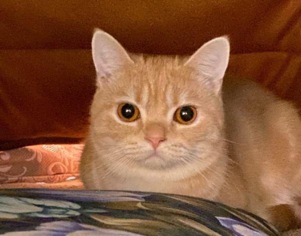 猫は『視線』で訴えている!あなたをじーっと見つめる3つの理由とは?