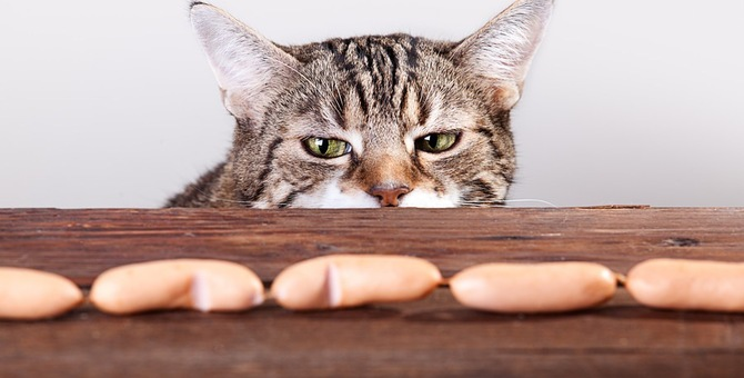 猫が食欲不振な原因は?どう対処したら良いの?