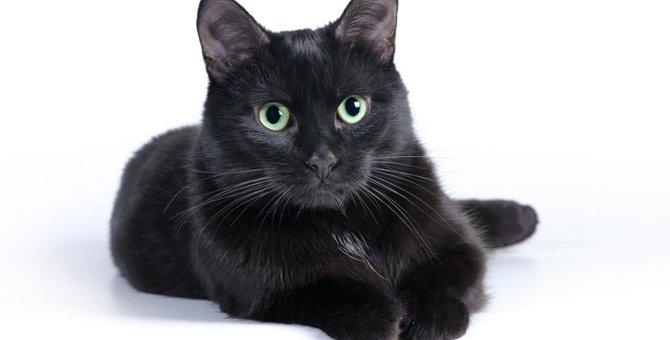 黒猫が横切ることの各国での意味