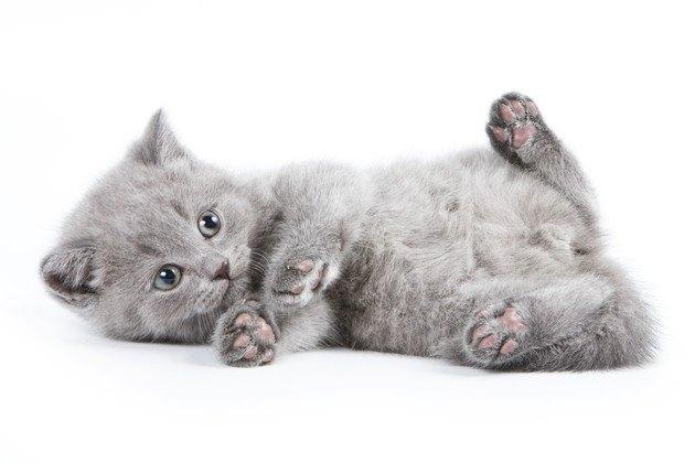 猫のへその緒は切るべき?切り方や取れる時期
