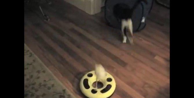 恥ずかしがり屋の猫ちゃん、そそくさと定位置に戻る