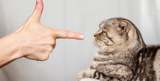 猫に絶対やってはいけない2つの叱り方と対処法