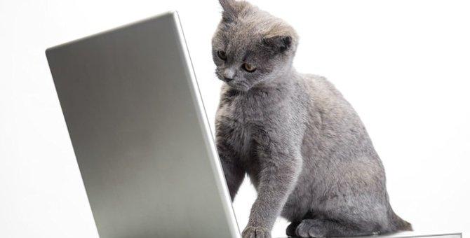 猫の知能は犬にも負けていない!その特徴とは
