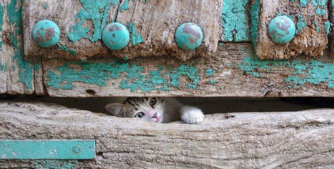 飼い主のトイレ中に猫がドアの下から手を入れてくる理由5つ