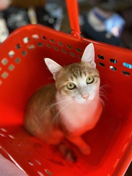 実は猫が『好き』を伝えているサイン5つ