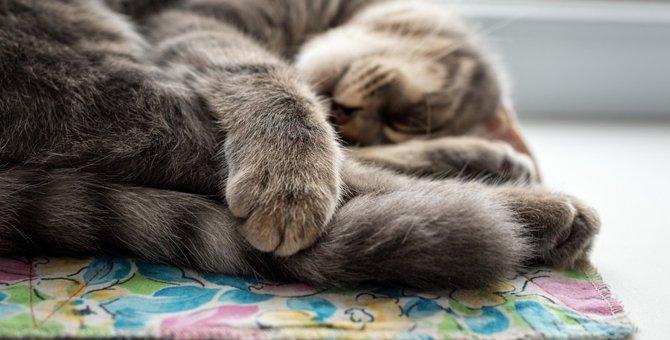 猫がストレスを感じている時の4つのサインは?