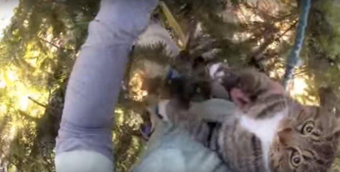 降りれニャイ!木の上で途方にくれる猫をレスキュー