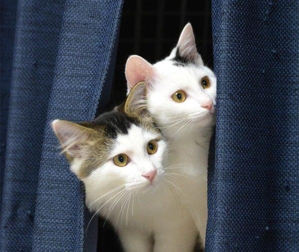 猫の多頭飼いでストレスを与えないようにするコツ5つ