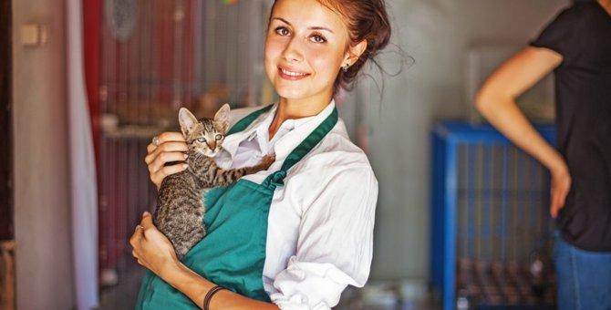猫シェルターについて  その活動と保護猫の譲渡