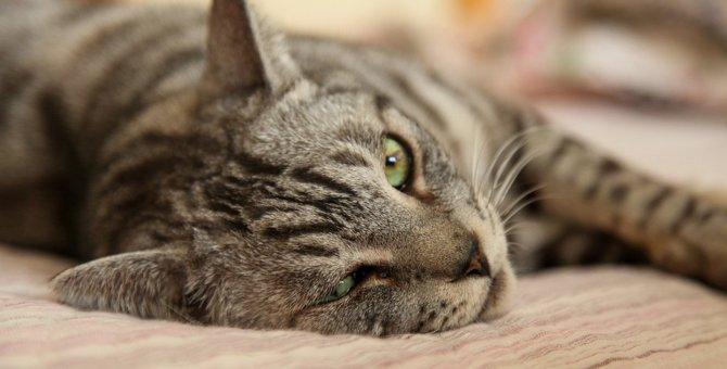 猫が『眠れない』時にみせる仕草3つ