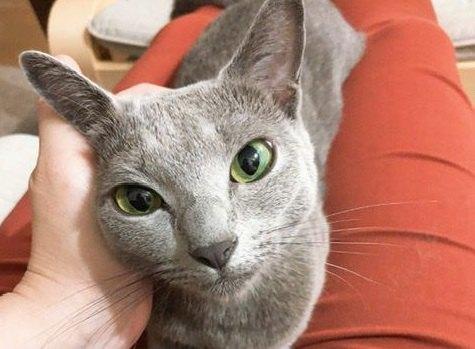 猫が人の『腕にしがみつく』ときの心理4つ