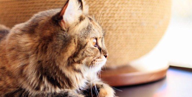 『考えごとをしている猫がする行動』4つ!物思いにふけっている猫にしちゃダメな行為とは?