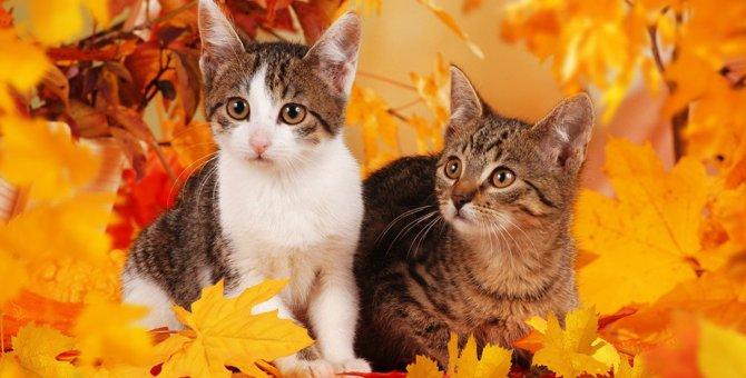 猫に起こる『秋の変化』4選!飼い主がすべきケアとは?