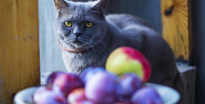 猫にも果物を!与えていい物・悪い物