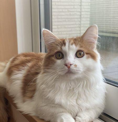 猫を幸せにする方法5選!愛猫のために今すぐ出来ることまとめ