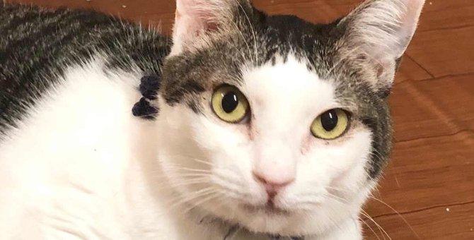 FIV陽性にも負けない人気者の猫…幸せな未来へ力強く進む!