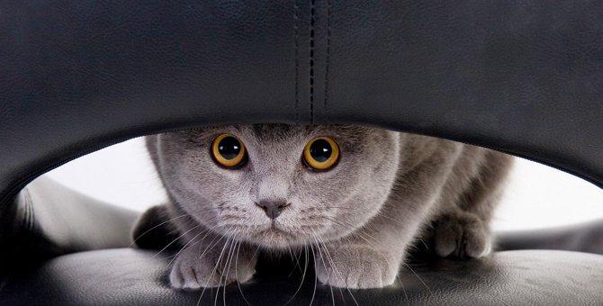 『警戒心が強い猫』の特徴4つ!仲良くなるためにすべきことは?