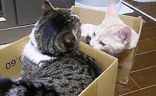 箱の中はリラックス!順番待ちしてまでも箱に入る猫ちゃん☆