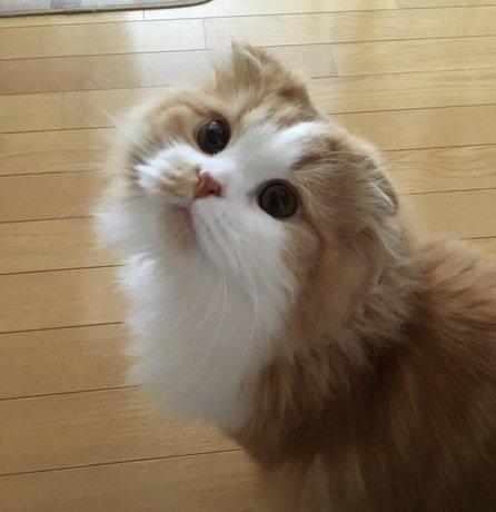 猫が心配しちゃう飼い主の行動7選