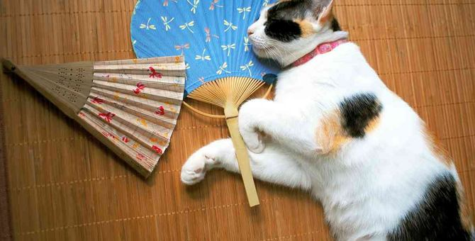 猫が『夏バテ』した時の症状5つ!飼い主がすべき予防策とは?