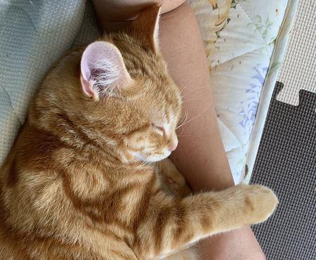 猫が飼い主の腕で寝たがる理由3つ