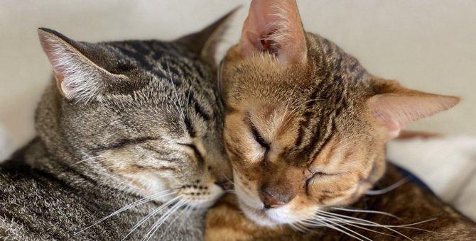 LAYLAの12猫占い【11/2~11/8】のあなたと猫ちゃんの運勢