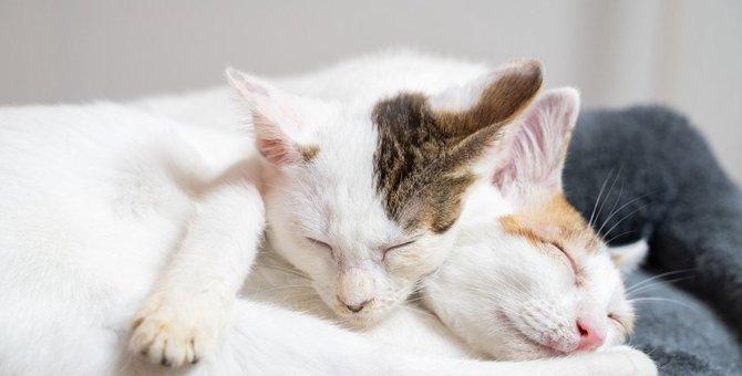 『就寝中の猫』に絶対しちゃダメなNG行為3つ