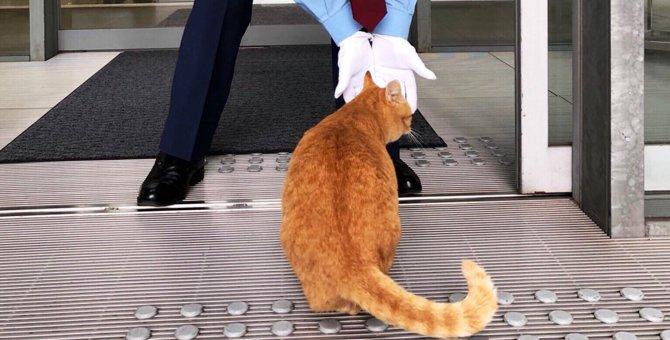 美術館に入りたい猫と警備員さんの攻防戦!あの猫ちゃん達はあの後どうなった?