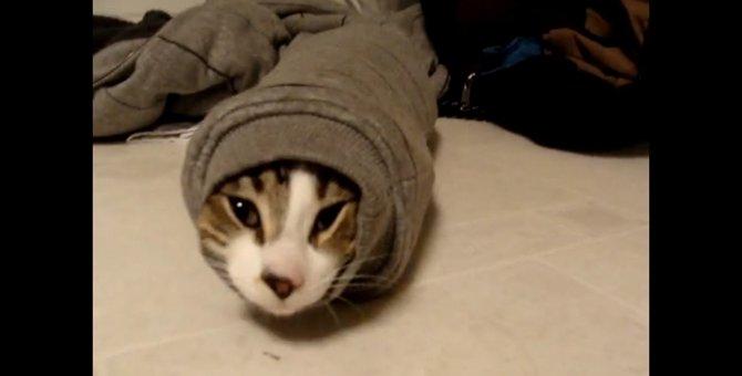 ピッタリフィット!猫ちゃんが選んだ一番暖かい場所とは…