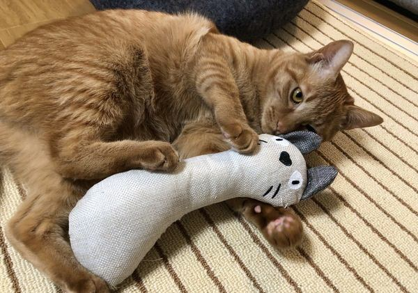 猫の「隠し特技」5つ