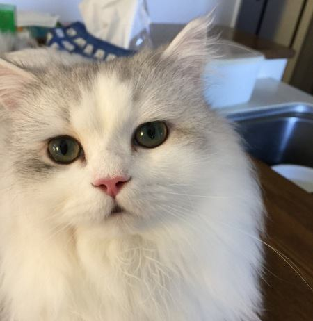 猫の嗅覚はどのくらい?鼻の造りから人間との比較まで